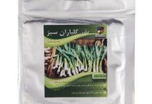 Photo of خرید بهترین مارک بذر سبزیجات اینترنتی ارزان قیمت و با کیفیت