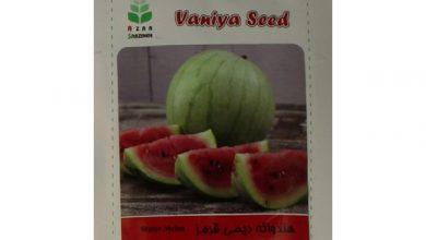 Photo of خرید بهترین بذر هندوانه ارزان قیمت + 8 مدل با کیفیت
