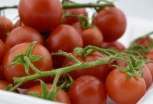 Photo of خرید گوجه فرنگی ارزان قیمت +7 مدل با کیفیت